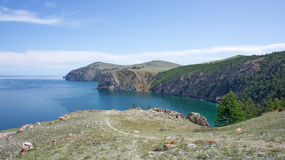 Baikal, frères d'arbre de cap Photos libres de droits