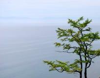 Baikal lake. Day, trees, mountains on the horizon Stock Image