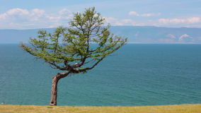 Baikal Lake. Olkhon Island. Tree with ribbons. Tree of desire with colored ribbons in the Olkhon Island, Baikal Lake. Shamanism stock video footage