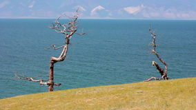 Baikal Lake. Olkhon Island. Tree with ribbons. Tree of desire with colored ribbons in the Olkhon Island, Baikal Lake. Shamanism stock footage