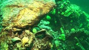 Baikal Lake Underwater. Underwater landscapes of Baikal Lake covered with green baikal sponge mats stock video