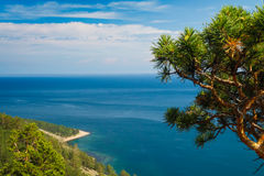 Baikal lake view. View on Baikal lake with pine tree royalty free stock images