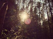 Baikal laken Fotografering för Bildbyråer