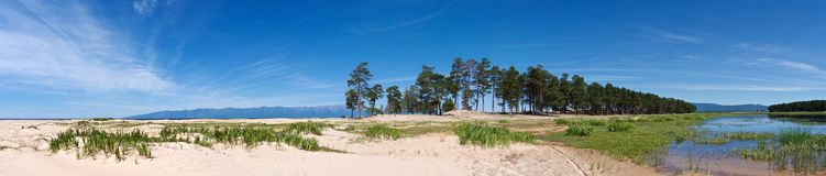 Baikal lakeshore with white sand and evergreen pines stock images
