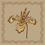 Baikal orchid illustration in doodle style. Stock Photos