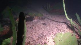 Baikal sous-marin la nuit clips vidéos