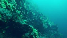 Baikal underwater. Underwater landscape of Baikal Lake stock footage