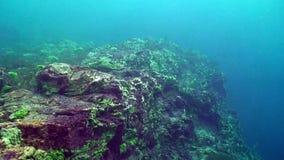 Baikal underwater. Underwater shelf of Baikal Lake with sponges on it stock footage