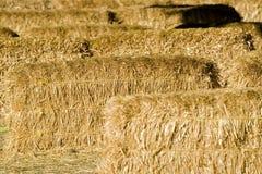 Bail me out. Bailed hay on the farm Stock Photos