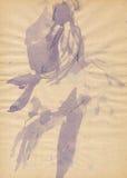 Bailarín-bailarina de las mujeres Fotos de archivo