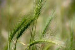 Baile de la cosecha de la fibra en el viento imagen de archivo