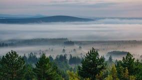 Baile de la niebla en el amanecer almacen de video
