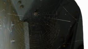 Baile de la web de araña en el viento almacen de metraje de vídeo