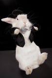 Baile del conejo Fotografía de archivo libre de regalías