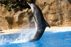 Baile del delfín en agua Imagenes de archivo