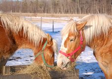 Bailey Farm Stock Images