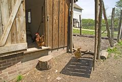 Bailey farm chicken coop Royalty Free Stock Images