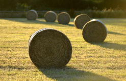 Bails. Fresh hay bails in summer golden light royalty free stock photos