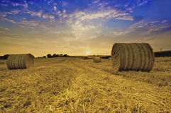 Bails of Golden Hay. In a field in the countryside stock photography