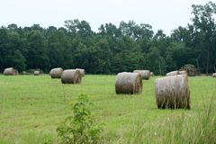 Bails of Hay Royalty Free Stock Images