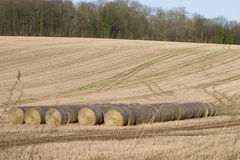 Bails of hay. In a field royalty free stock photography