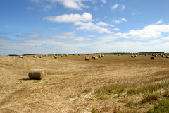 Bails of Hay in the Fields. Of Northumberland (England royalty free stock photography