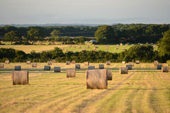 Bails. Hay bails in summer morning light, english countryside stock photos