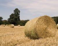 Bails of straw Stock Photos