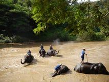 Bain d'éléphant Photos stock