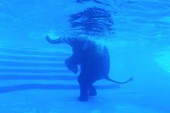 Bain d'éléphants Photos libres de droits