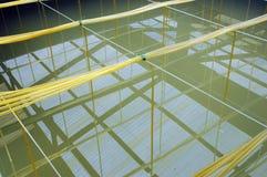 Bain d'aquiculture de crevette images libres de droits