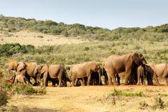 Bain de boue d'éléphant de Bush d'Africain photos libres de droits