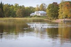 Bain de canards dans un étang Photographie stock libre de droits