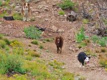 Bain de foule avec les chiens Photo stock
