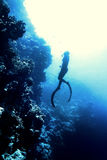 Bain de Freediver en mer Photos stock