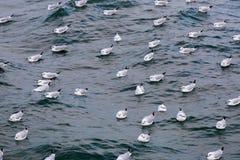 Bain de mouette en mer Photos libres de droits