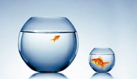 Bain de poisson rouge Image stock