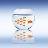 Bain de poisson rouge Photos stock