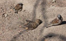Bain de sable Image libre de droits
