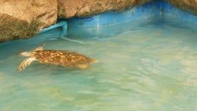 Bain drôle de tortue sur la piscine du woller dans le zoo clips vidéos