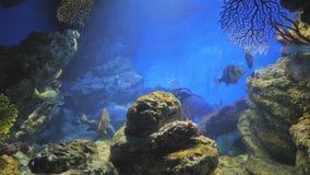 Bain exotique de poissons dans l'aquarium banque de vidéos
