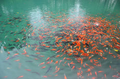 Bain gai de poissons Photo stock