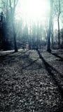 Bain léger dans la forêt Photographie stock