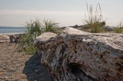 Bainbridge海岛漂流木头 库存照片