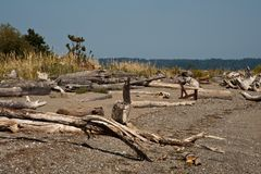 Bainbridge海岛漂流木头 库存图片