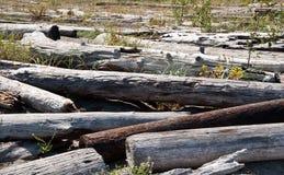 Bainbridge Island driftwood Royalty Free Stock Photo