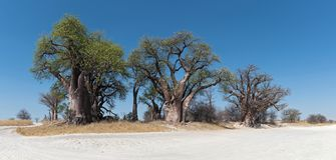 Baines baobab od Nxai niecki parka narodowego, Botswana obrazy royalty free