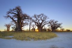 Baines-Baobab-Sonnenaufgang Lizenzfreies Stockbild
