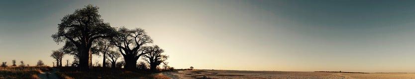 Baines Baobab Sunrise Panoramic royalty free stock photo