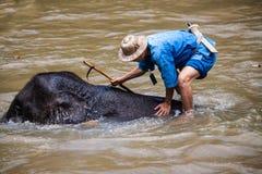 Bains de Mahout son éléphant Images stock